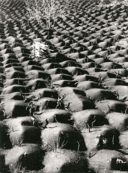 Roiter, Coltivazione della vite, Etna 1953