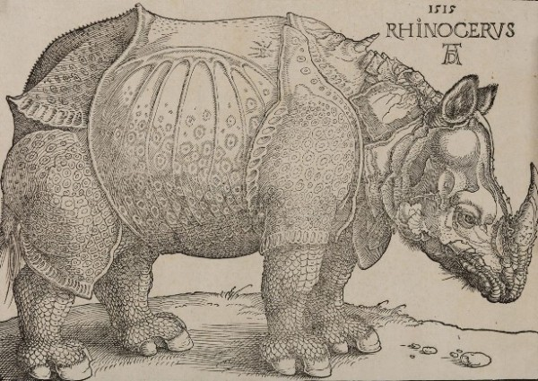 Dürer, Il rinoceronte, 1515