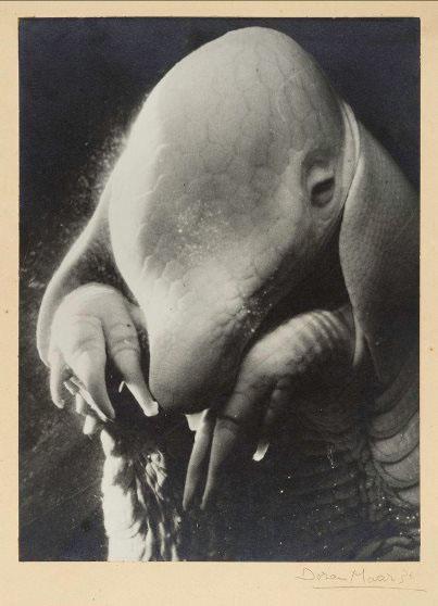 Dora Maar, Portrait d'Ubu, 1936